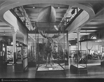 http://images.library.amnh.org/d/t/8x10/0001/00039487_l.jpg