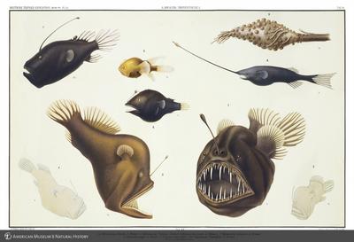 http://lbry-web-002.amnh.org/san/to_upload/opulentoceans/b1048127_1.jpg
