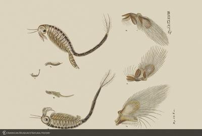 http://lbry-web-002.amnh.org/san/to_upload/opulentoceans/b1136599_4.jpg