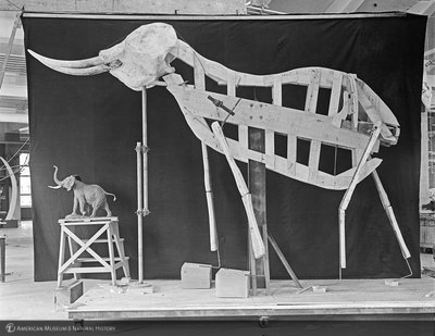http://images.library.amnh.org/d/t/4x5/0001/00282213_l.jpg