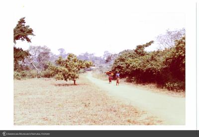 http://lbry-web-002.amnh.org/san/photoprintcollections/Arth/ppc-a78-100213278-08.jpg