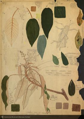 http://lbry-web-002.amnh.org/san/mo_exhibition/art002_b2_05a.jpg