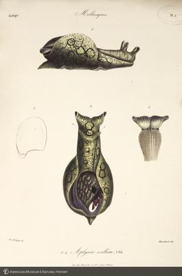 http://lbry-web-002.amnh.org/san/to_upload/opulentoceans/b1136598_4.jpg