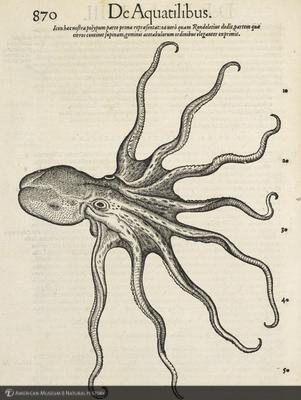 http://lbry-web-002.amnh.org/san/naturalhistories/b11864023_5.jpg