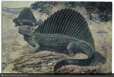 http://lbry-web-002.amnh.org/san/AMNH_postcards/100213323_29.jpg