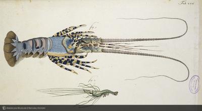 http://lbry-web-002.amnh.org/san/naturalhistories/b11448969_2.jpg