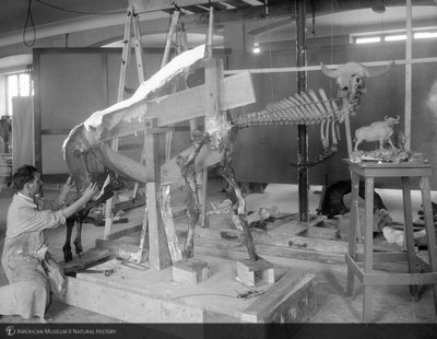 http://images.library.amnh.org/d/t/8x10/0002/00311793_l.jpg