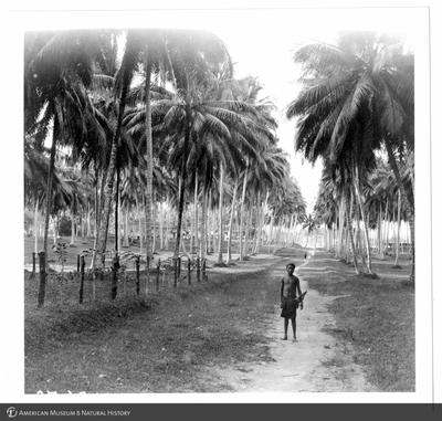 http://lbry-web-002.amnh.org/san/to_upload/Beck-PapuaNewGuinea/NG-5x7-prints/115679.jpg