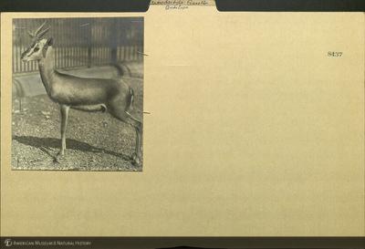 http://lbry-web-002.amnh.org/san/mo_exhibition/ppc_532_b11_f123_114.jpg