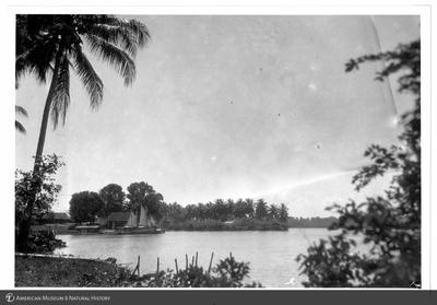 http://lbry-web-002.amnh.org/san/to_upload/Beck-PapuaNewGuinea/NG-5x7-prints/115766.jpg