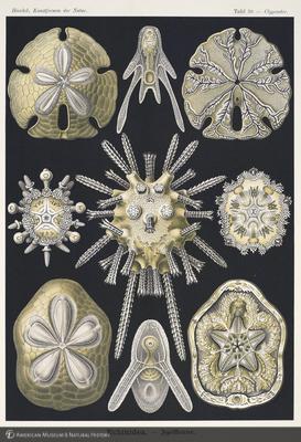 http://lbry-web-002.amnh.org/san/naturalhistories/b10528283_6.jpg