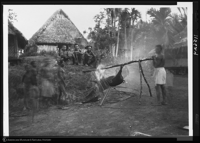 http://lbry-web-002.amnh.org/san/to_upload/Beck-PapuaNewGuinea/NG-5x7-negs/115624.jpg