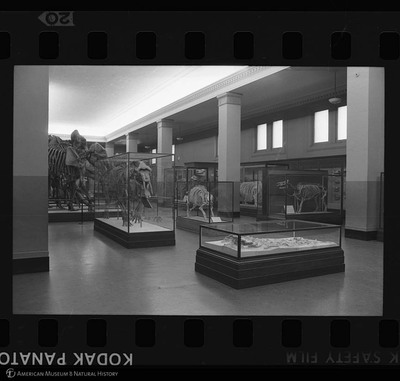 http://lbry-web-002.amnh.org/san/to_upload/35mm_halls_new/64096_20.jpg