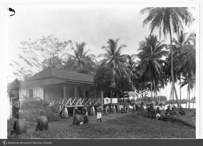 http://lbry-web-002.amnh.org/san/to_upload/Beck-PapuaNewGuinea/NG-5x7-prints/115649.jpg