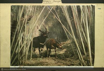 http://lbry-web-002.amnh.org/san/mo_exhibition/ppc_532_b09_f117_029.jpg