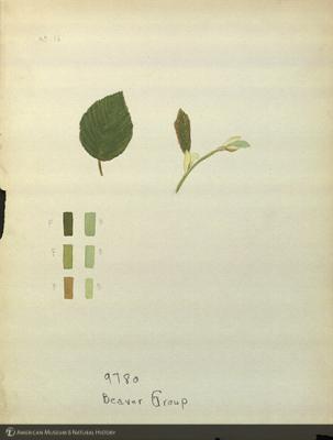 http://lbry-web-002.amnh.org/san/mo_exhibition/art003_b1_12.jpg