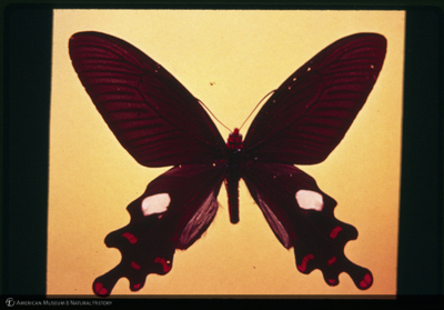 http://lbry-web-002.amnh.org/san/35mm/K14938.jpg