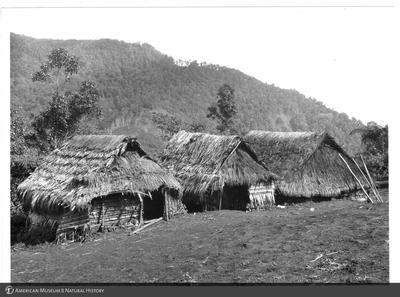 http://lbry-web-002.amnh.org/san/to_upload/Beck-PapuaNewGuinea/NG-5x7-prints/115737.jpg