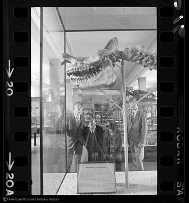 http://lbry-web-002.amnh.org/san/to_upload/35mm_halls_new/602016_20.jpg