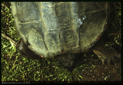http://lbry-web-002.amnh.org/san/to_upload/35mm/K12680.jpg