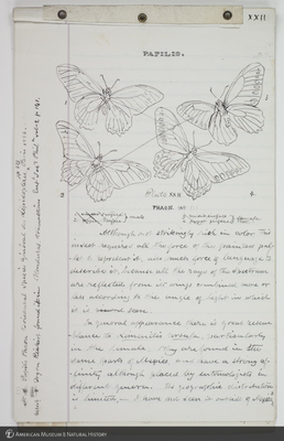 http://lbry-web-002.amnh.org/san/to_upload/titianbutterflies/b1083009_182.jpg