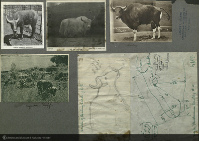 http://lbry-web-002.amnh.org/san/mo_exhibition/art001_b6_f8_06.jpg