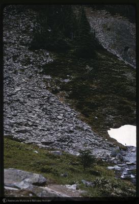 http://lbry-web-002.amnh.org/san/35mm/K14864.jpg
