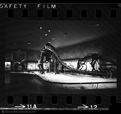 http://lbry-web-002.amnh.org/san/to_upload/35mm_halls_new/602863_12.jpg