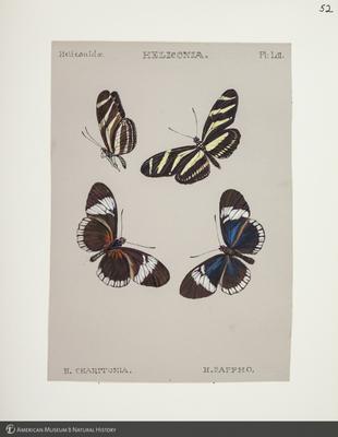 http://lbry-web-002.amnh.org/san/to_upload/titianbutterflies/b1083009_54.jpg