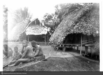 http://lbry-web-002.amnh.org/san/to_upload/Beck-PapuaNewGuinea/NG-5x7-prints/115754.jpg