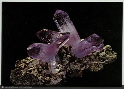 http://lbry-web-002.amnh.org/san/AMNH_postcards/100213323_37.jpg