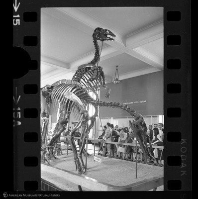 http://lbry-web-002.amnh.org/san/to_upload/35mm_halls_new/600175_15a.jpg