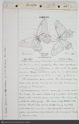http://lbry-web-002.amnh.org/san/to_upload/titianbutterflies/b1083009_181.jpg