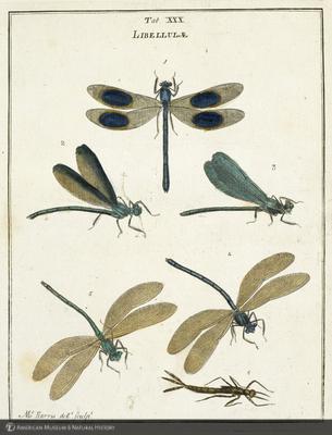 http://lbry-web-002.amnh.org/san/naturalhistories/b12055384.jpg