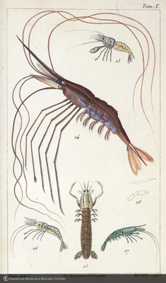 http://lbry-web-002.amnh.org/san/naturalhistories/b10468055_4.jpg