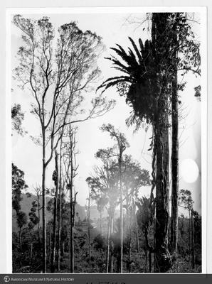 http://lbry-web-002.amnh.org/san/to_upload/Beck-PapuaNewGuinea/NG-5x7-prints/115748.jpg