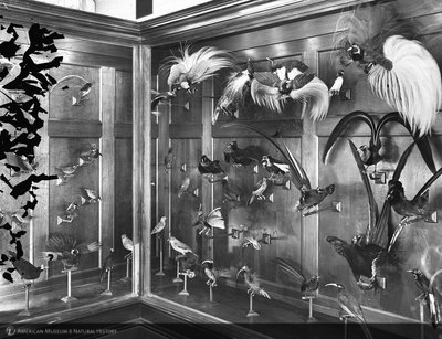 http://images.library.amnh.org/d/t/8x10/0001/00031960_l.jpg