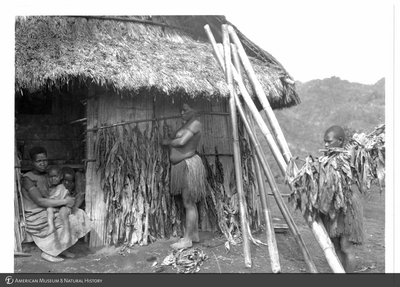 http://lbry-web-002.amnh.org/san/to_upload/Beck-PapuaNewGuinea/NG-5x7-prints/115750.jpg
