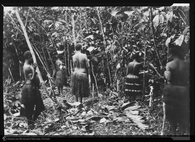 http://lbry-web-002.amnh.org/san/to_upload/Beck-PapuaNewGuinea/NG-5x7-negs/115606.jpg