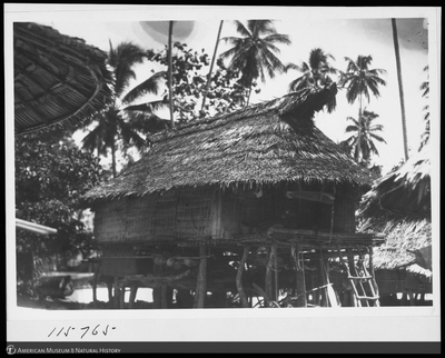 http://lbry-web-002.amnh.org/san/to_upload/Beck-PapuaNewGuinea/NG-5x7-negs/115765.jpg