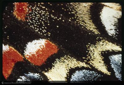 http://lbry-web-002.amnh.org/san/35mm/K14921.jpg