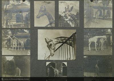 http://lbry-web-002.amnh.org/san/mo_exhibition/ppc_533_b02_f029_012.jpg