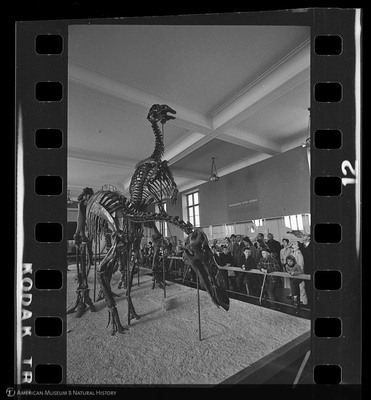 http://lbry-web-002.amnh.org/san/to_upload/35mm_halls_new/600176_12.jpg