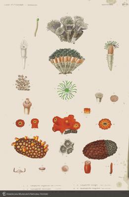 http://lbry-web-002.amnh.org/san/to_upload/opulentoceans/b1135913_5.jpg