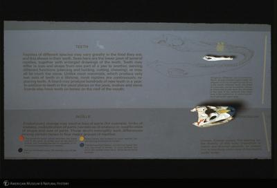http://lbry-web-002.amnh.org/san/35mm/K11312.jpg