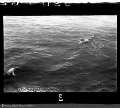 http://lbry-web-002.amnh.org/san/to_upload/35mm/VHC-T003.jpg