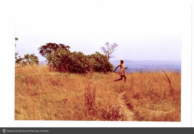 http://lbry-web-002.amnh.org/san/photoprintcollections/Arth/ppc-a78-100213279-15.jpg