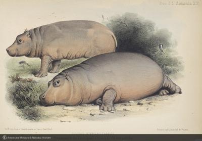 http://lbry-web-002.amnh.org/san/naturalhistories/b11289314.jpg