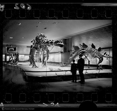 http://lbry-web-002.amnh.org/san/to_upload/35mm_halls_new/602863_24.jpg