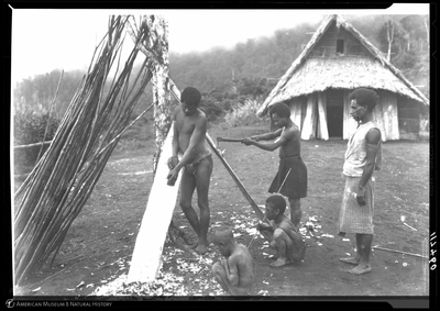 http://lbry-web-002.amnh.org/san/to_upload/Beck-PapuaNewGuinea/NG-5x7-negs/117460.jpg